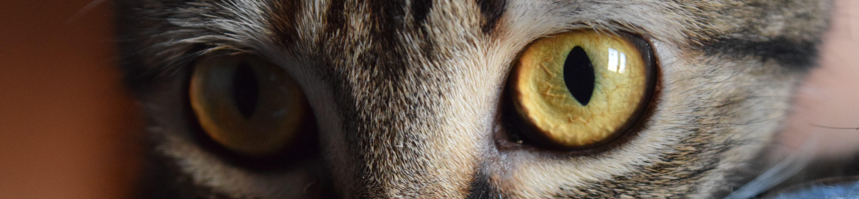 Csömöri Állatorvosi Rendelő
